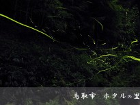 鳥取でホタルを鑑賞するなら樗谿(おうちだに)公園がおすすめ