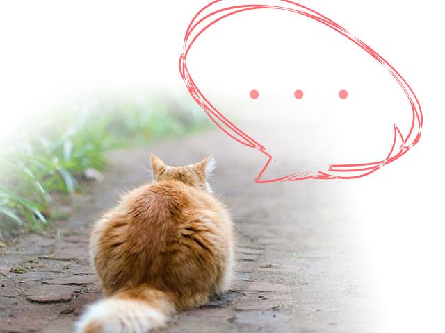 無視する猫