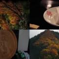 和歌山にある高野山にいってきた【紅葉~ゴマ豆腐編】